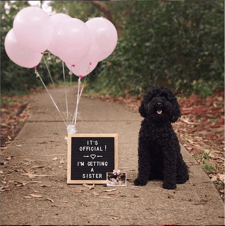 how to announce your pregnancy using your pets in the picture. Perfect for Valentine's Day Pregnancy announcements